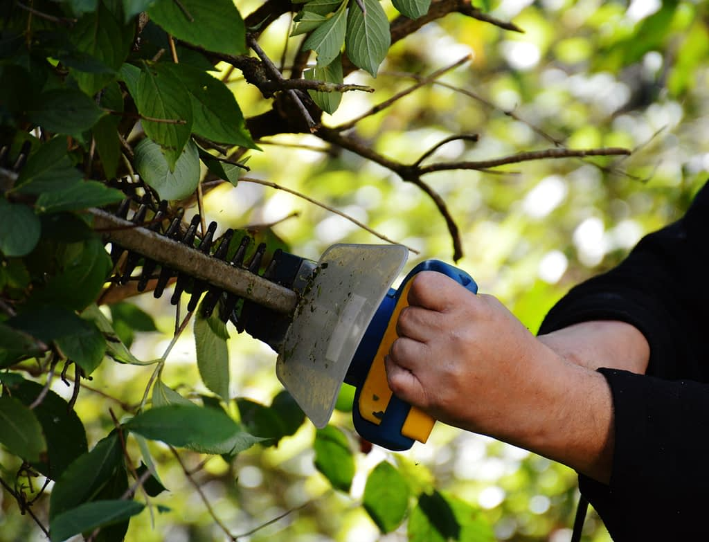 best-gas-hedge-trimmer
